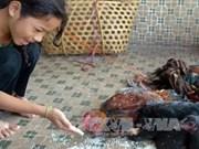 Reporta Cambodia otro caso mortal de gripe aviar
