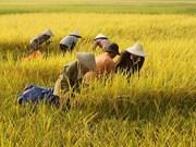 FAO alerta sobre escasez de alimentos en Asia - Pacífico