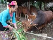 Oxfam lanza proyecto de reducción de la pobreza en Vietnam