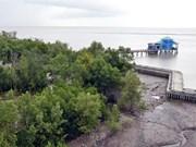 Vietnam desarrolla bosques litorales para mitigar el cambio climático