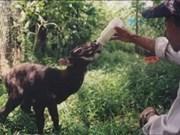 Thua Thien-Hue fortalece protección forestal y animales endémicos