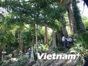 Baniano de 800 años reconocido como patrimonio nacional