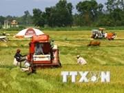 Vietnam diversifica mercados para exportación de productos agrícolas