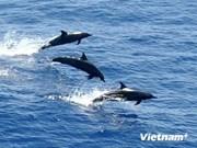 Rescatan y liberan delfín con pico largo en costa vietnamita