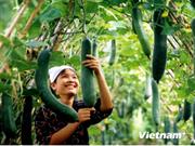 Presentan en Vietnam normas para producción agrícola