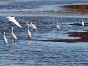 Priorizan conservación de valiosas especies piscícolas