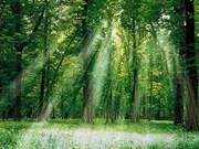 ASEAN y Sudcorea acuerdan fortalecer cooperación forestal