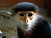 Vietnam emite sellos por protección de primates