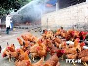 Fomentan prevención y lucha contra nuevo virus H5N6