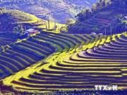 Terrazas en Sapa entre paisajes más bellos del mundo