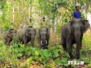 Urgen medidas para proteger elefantes asiáticos en Vietnam