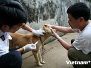 En Vietnam mitin por Día Mundial contra la Rabia