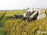 Vietnam busca reducir gases de efecto invernadero en agricultura