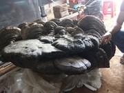 Hallan gigante hongo en provincia vietnamita