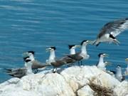 Recibirá Vietnam certificado Ramsar para Parque Nacional