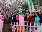 Plantan mil cerezos japoneses en Dien Bien