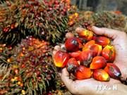 Indonesia sigue siendo mayor exportador mundial de aceite de palma