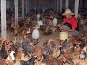 Omán cancela prohibición a productos avícolas de Vietnam