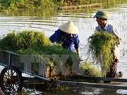Cerca de 800 nuevas zonas rurales en Vietnam