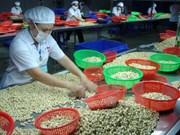 Cooperan Vietnam y Nigeria en el sector de anacardo