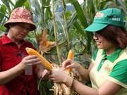 Comercializará en Vietnam productos transgénicos