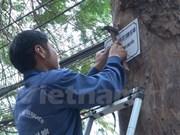 Hanoi consulta al público sobre plan de sustitución de árboles