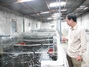 Compañía sudcoreana invierte en planta procesadora de congrio en Vietnam