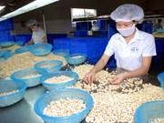 Obtiene Vietnam altos ingresos por ventas de anacardo