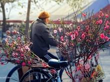 CNN elige a Hanoi destino atractivo en Año Nuevo Lunar