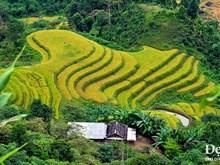 Pintorescas terrazas de arroz de Hoang Su Phi en el Norte de Vietnam