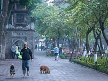 Hanoi apacible y tranquila en el primer día del Tet