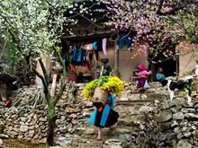 Etnia Thai en Nghe An beneficiada de turismo comunitario