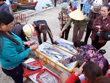 Vietnam despliega medidas urgentes en respuesta a advertencia de EC sobre pesca ilegal