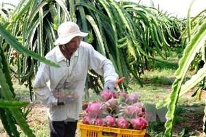 Vietnam alcanza récord por ventas externas de frutas y verduras en 2017
