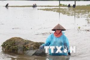 Vietnam se esfuerza en labores de prevención y mitigación de afectaciones de desastres naturales